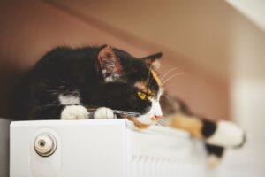 Confort cerca del radiador